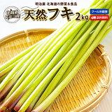 ふき 送料無料 2kg 生 北海道 ニセコ産 天然 春の山菜 冷蔵便 フキ 蕗