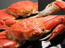 日本海産 ズワイガニ ずわいがに 姿 オス 1尾ズワイ 蟹 Mサイズ 送料無料 国産 ずわい蟹 かに 送料無料 送料込 価格日本産 ズワイカニ ずわいかに限定 楽天 通販 価格 特価 販売 お土産