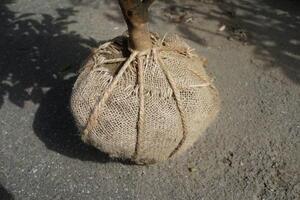 麻袋鉢カバー