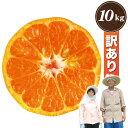 【訳あり】 有田 ポンカン 10kg 訳あり みかん科 柑橘...