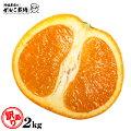 清見オレンジ訳あり清見オレンジ2.0kg果物フルーツ訳あり和歌山有田産地直送オレンジ2kg