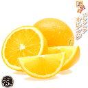 バレンシアオレンジ 7.5kg【訳あり】 産地直送 和歌山県 国内 国産 送料無料 オレンジ 完熟 果物 フルーツ 美味しい おいしい 甘味 酸味 糖度 訳あり 自宅用 家庭用 箱買い 箱 訳アリ