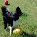 室内、室外でも遊べる犬のおもちゃ エッグ・egg!【特価セール】