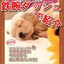【ザ!鉄腕ダッシュ!!で紹介】子犬を迎えたその日からはじめる「しつけ」DVD ザ!鉄腕!DASH...