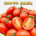 【送料無料】熊本県産ミニトマト[ルル]3kg新鮮産地直送甘いお取り寄せお得サラダお弁当おやつ糖度8〜10度美味しい