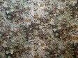 LIBERTYリバティプリント・国産テクノヴィンテージ生地<Milliner>(ミリナー)3632272-J16D