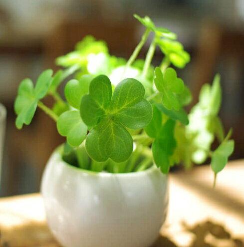 クローバー 消臭アーティフィシャルグリーン Bタイプ イミテーション フェイクグリーン 観葉植物 造花 光触媒 CT触媒 人工観葉植物 フェイクグリーン インテリアグリーン ミニ