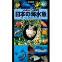 山渓ハンディ図鑑13 日本の海水魚