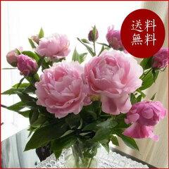 芍薬10本の花束 蕾が咲いたときは サプライズのように華やかに   【送料無料】ピンク系MIX...