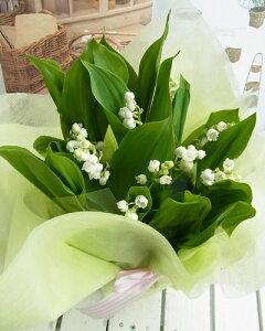 【送料無料】すずらん鉢植え9〜10本 5号鉢幸せの使者 「スズランの日」「お祝」「誕生日」「ス…