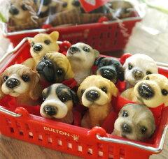「わんちゃんマスコット♪ DOG ミニミニ10犬種set」[みどりのゆび 楽天市場店]