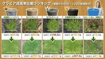 送料無料クラピア専用お得な植栽シート1m×100m(100m2)+U字型ピンのセット(500本)セット防草シートアンカーピン