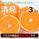 【訳あり】清見オレンジ 清見タンゴール 西宇和地区八幡浜市産 約3kg 送料無料