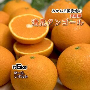 清見タンゴール 清見 清見オレンジ 清見みかん みかん 約5kg 家庭用 送料無料