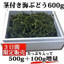 【3日間限定で100g増量】茎付き海ぶどうたっぷり600g【鮮度抜群】の海ぶどう