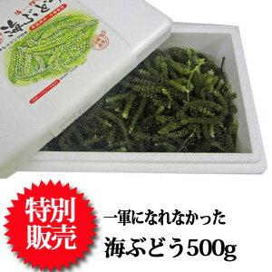 茎付海ぶどう(500g)