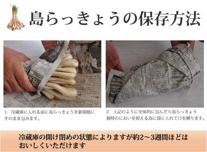 島らっきょう土付き(約1kg)伊江島産島らっきょう使用沖縄の島らっきょう|島ラッキョウ)