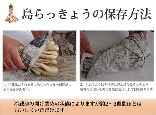 島らっきょう土付き(約1kg)伊江島産島らっきょう使用沖縄の島らっきょう|島ラッキョウ