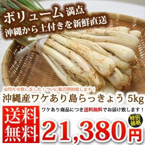 島らっきょう土付き(約5kg)当店では伊江島産島らっきょうをお届けします。沖縄の島らっきょう|島ラッキョウ