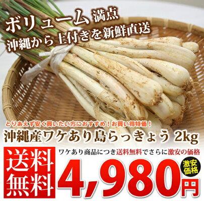ワケあり島らっきょう土付き(約2kg)当店では伊江島産島らっきょうをお届けしまうす。沖縄の島らっきょう 島ラッキョウ