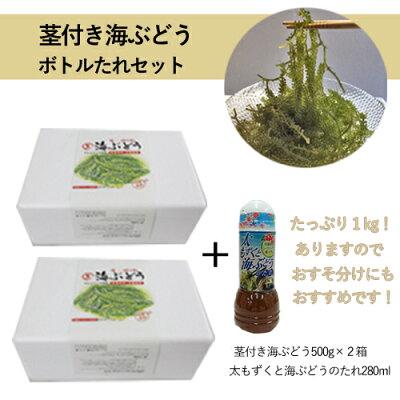 ワケあり茎付海ぶどう(500g)