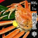 越前ガニ(中)福井県産越前がに・蟹 約800g〜1kg× 1...