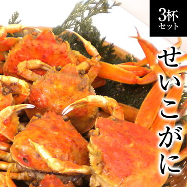 せいこがに 福井県産せいこ蟹(セイコガニ) 3杯 カニ かに 越前ガニ かにみそ せこ蟹 セコガニ こっぺがに コッペガニ お歳暮 せいこがに せこがに[冷蔵]