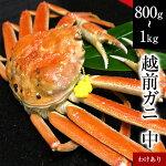 わけありガニ(中)福井県産越前かに(訳あり越前ガニ・足折れ蟹)1杯約800g〜1kg