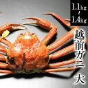 越前ガニ(大)福井県産越前がに・蟹 約 1kg〜1.3kg×...