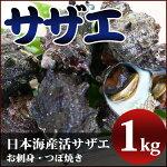 サザエ(1kg)新鮮・海の幸活さざえ(お刺身・つぼ焼き)日本海で獲れた新鮮なサザエを活きたままお届け