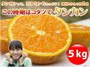 皮に爪を立てると、ぷ〜〜んと良い香り!筋もほとんどなくて、まるでネーブルオレンジのよう。...