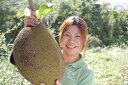 ドリアン好きな人で、食べ方も知ってる方なら、これは買いです!巨大果実「パラミツ」ジャック...
