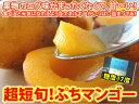 【沖縄から送料無料】小さくて可愛いプチマンゴー(ミニマンゴー)見た目悪い!黒い斑点もある...