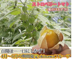 ストロベリートマト(食用ほおずき)沖縄産ホオズキ(食用ほおずき)甘酸っぱく、フルーティー...
