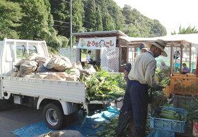 甘いとうもろこし通販販売行列のできる岡山県ひるぜん農園