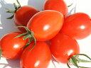 最低糖度7.0度!甘酸っぱい昔ながらのトマトの味ミニトマト 王糖姫(おとひめ) 2kg
