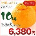 不知火 デコポン!不知火(デコポン) 10kg 熊本県産 【...