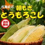 【送料無料】北海道産とうもろこし【産地直送】