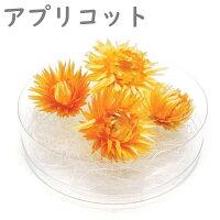 ハーバリウム 花材 デイジー
