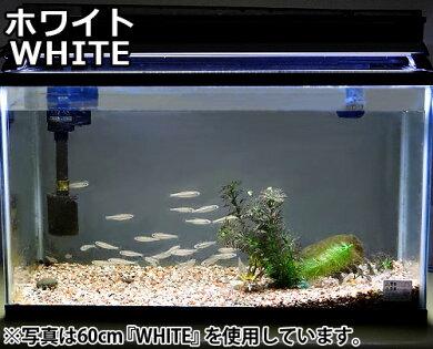 ゼンスイ水槽用LEDランプ60cmWHITE(ホワイト)
