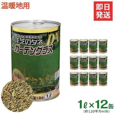 カネコ種苗西洋芝の種『JガーデングラスDX/温暖地用』《お得な12缶セット》(約120平方m)[r10][s10]