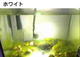 水中集魚ライトオルルド釣具水中集魚灯LEDライト防水ブルーグリーンホワイト白緑青