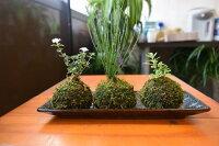 苔玉盆栽セットコケ玉セット