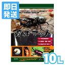 サンコー 育成マット 10L(カブト虫マット)