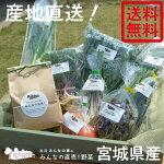 岩沼みんなの家のお米・野菜詰め合わせセット★お米1kg・直売野菜7〜8種