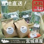 岩沼みんなの家のお米・野菜詰め合わせセット★お米2kg・直売野菜5〜6種