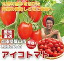 【アイコトマト2kg】 アイコトマト プチトマト 朝採り 高