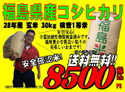 コシヒカリ マラソン