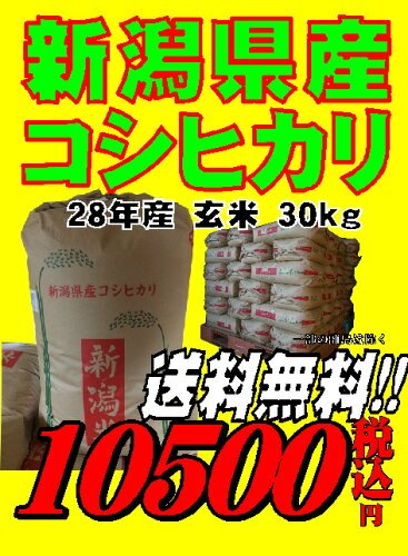 28年産新潟県産 コシヒカリ 玄米 30kg お米 【あす楽_...