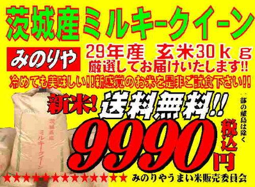 新米 ミルキークィーン 茨城県産 29年産 玄米 30Kg 精米無料 送料無料 【...